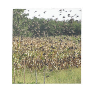 Cornfield and common starlings notepads
