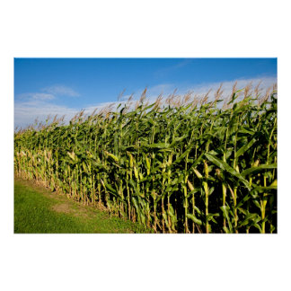 cornfield and sky poster