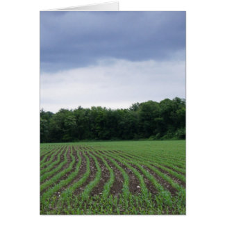 """Cornfields under the Clouds"" Card"