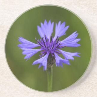 Cornflower (Centaurea cyanus) Coaster