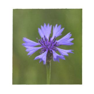 Cornflower (Centaurea cyanus) Notepads