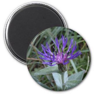 cornflower magnet