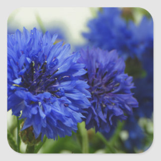 Cornflowers Square Sticker
