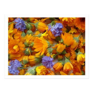 cornflowes and calendula postcard