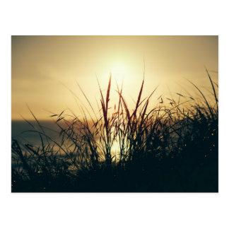 Cornish Coastal Summer Sunset Postcard. Postcard