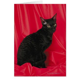 Cornish rex cat card