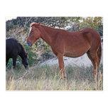 Corolla Wild Horses Postcard