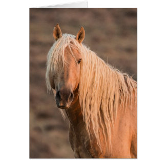 Corona's Dawn Portrait Wild Horse Greeting Card