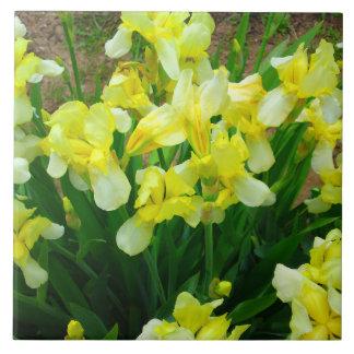 Correction d'iris jaune grand carreau carré