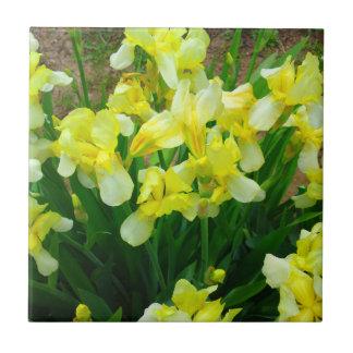 Correction d'iris jaune petit carreau carré