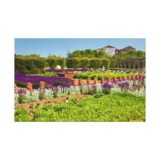 corridor of purple sage flowers and stachys lanata canvas print