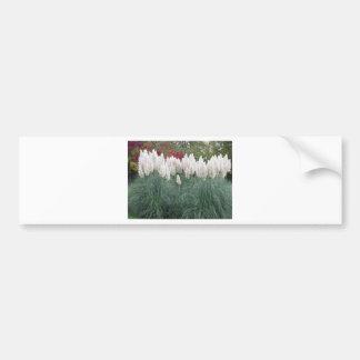 Cortaderia selloana known as pampas grass bumper sticker