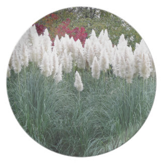 Cortaderia selloana known as pampas grass plate