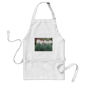 Cortaderia selloana known as pampas grass standard apron