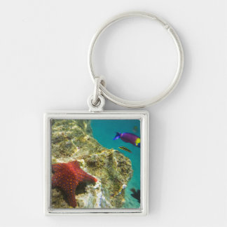 Cortez Rainbow Wrasse male and female and sea Key Chains