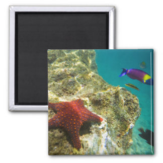 Cortez Rainbow Wrasse male and female and sea Refrigerator Magnet