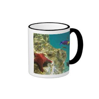 Cortez Rainbow Wrasse male and female and sea Mugs