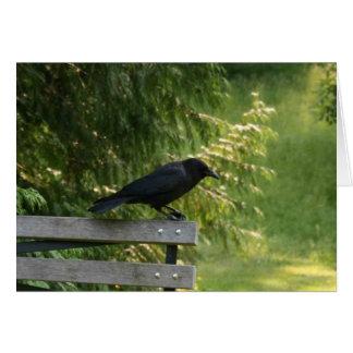 Corvus brachyrhynchos, American Crow Card