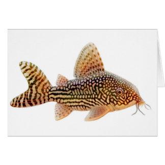 Corydoras Catfish Greeting Card
