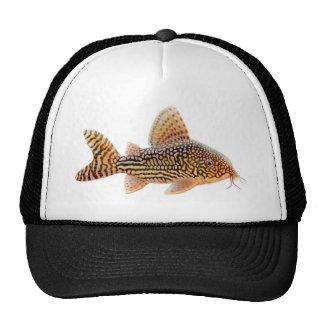 Corydoras Sterbai Catfish Hat