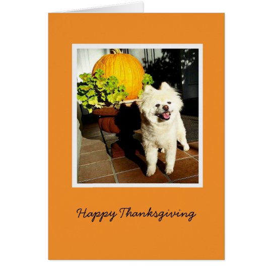 Cosmo the Puppy Thanksgiving Card