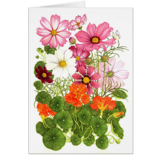 Cosmos and Nasturtiums Card