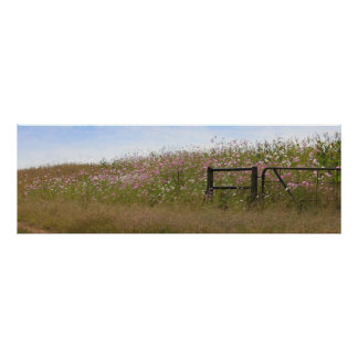 Cosmos Flowers along fence Poster