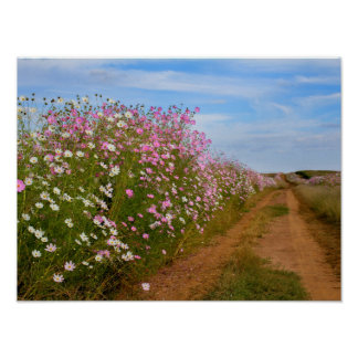Cosmos Flowers Welcome You Poster