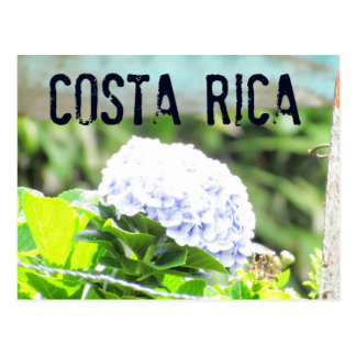 Costa Rica Flowers Postcard