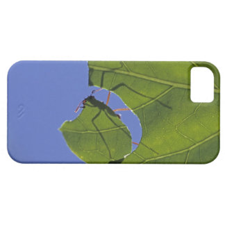 Costa Rica, Leaf cutter ants, Atta cephalotes iPhone 5 Cover