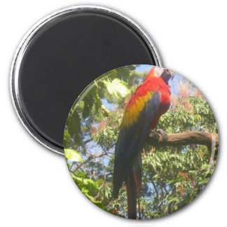 Costa Rica Macaw Magnet