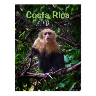 Costa Rica Monkey Postcard