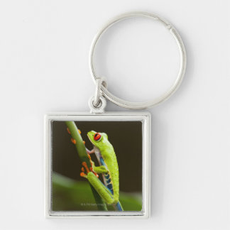 Costa Rica, Monteverde, Red-Eyed Tree Frog Silver-Colored Square Keychain