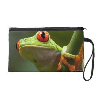 Costa Rica, Monteverde, Red-Eyed Tree Frog Wristlet Purse