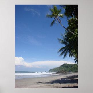 Costa Rica Palm #3 Poster
