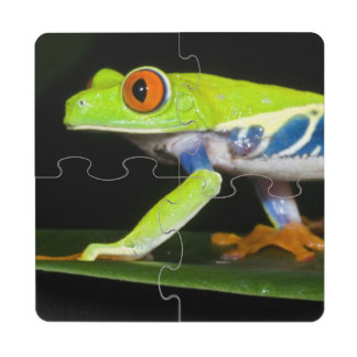 Costa Rica, Red-eyed Tree Frog (Agalychnis Drink Coaster Puzzle