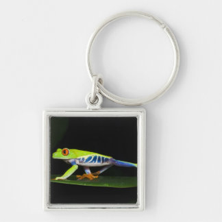 Costa Rica, Red-eyed Tree Frog (Agalychnis Silver-Colored Square Keychain