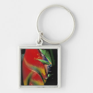Costa Rica, Red Eyed Tree Frog. Silver-Colored Square Keychain