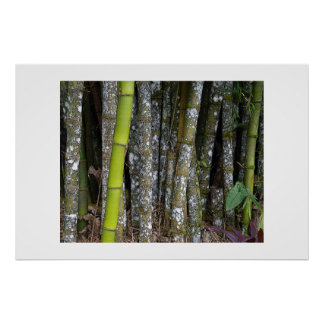 Costa Rican Rainforest Bamboo Art Poster