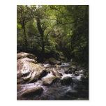 Costa Rican Rainforest Postcard
