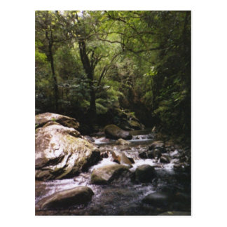 Costa Rican Rainforest Postcard