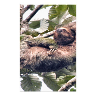Costa. Rican sloth Personalized Stationery