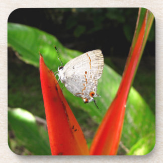 Costarican Butterfly Drink Coasters