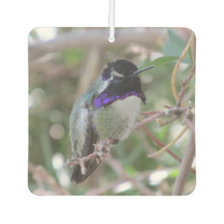 Costa's Hummingbird Air Freshener