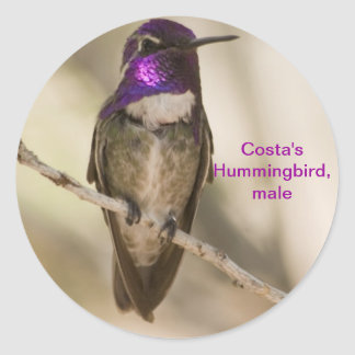 Costa's Hummingbird Classic Round Sticker