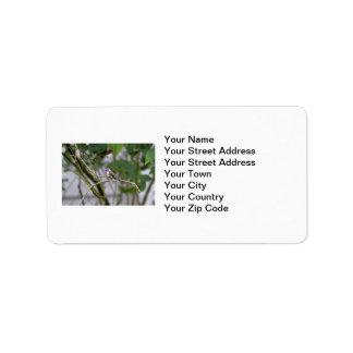 Costa's Hummingbird Address Label