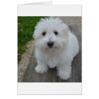 coton on bench card