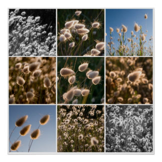 cotton grass montage poster