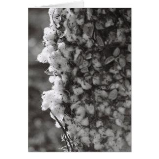 Cotton Harvest Card