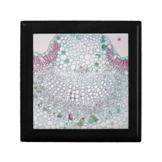 Cotton leaf under the microscope gift box